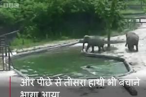 जब हाथी का बच्चा डूबा तो परिवार ने कैसे बचाया