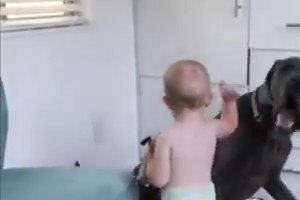 Little baby playing with Dog - Nice video clip