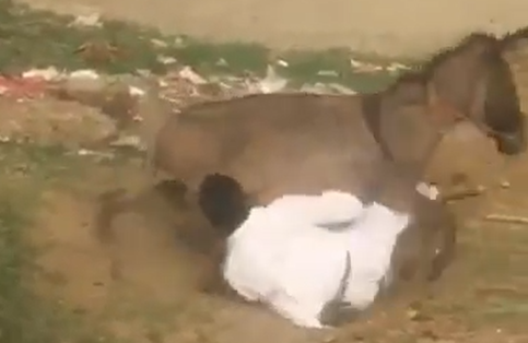 Man falls from Donkey