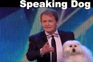 Speaking Dog  Like Human -  Wao Amazing Video