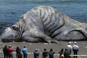 World`s Largest Biggest Animals