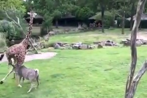 Zoo visitors were shocked when seeing this scene