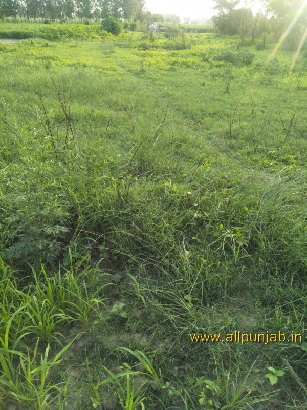 Green Grass in filed