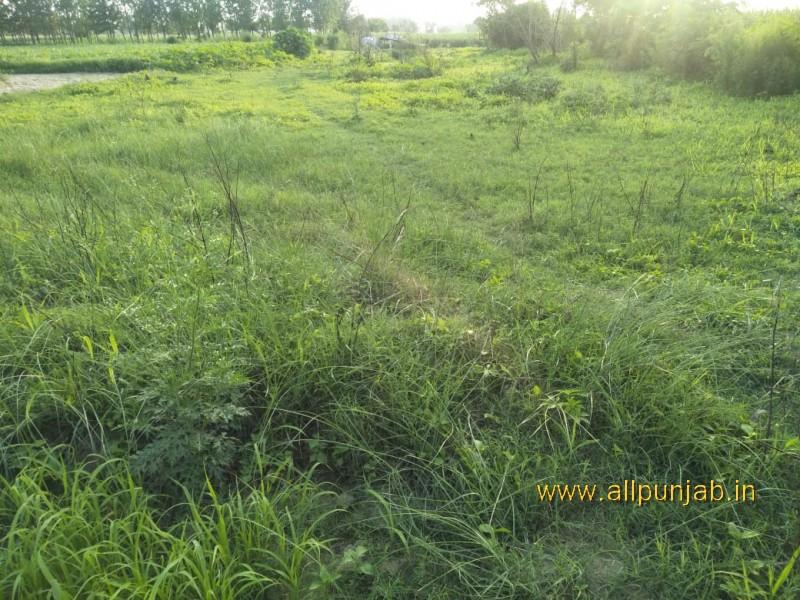 Green Grass field in Punjab - Punjab Images