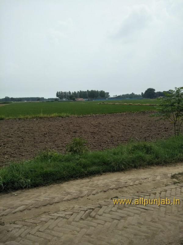 Green Field in Punjab - Punjab Images