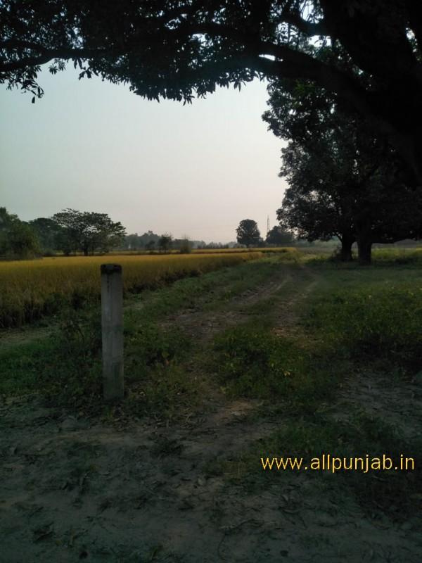 Green Grass off road  in Punjab - Punjab Images