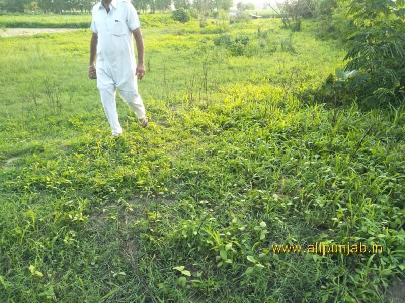 A Man Walking in fields Punjab Images